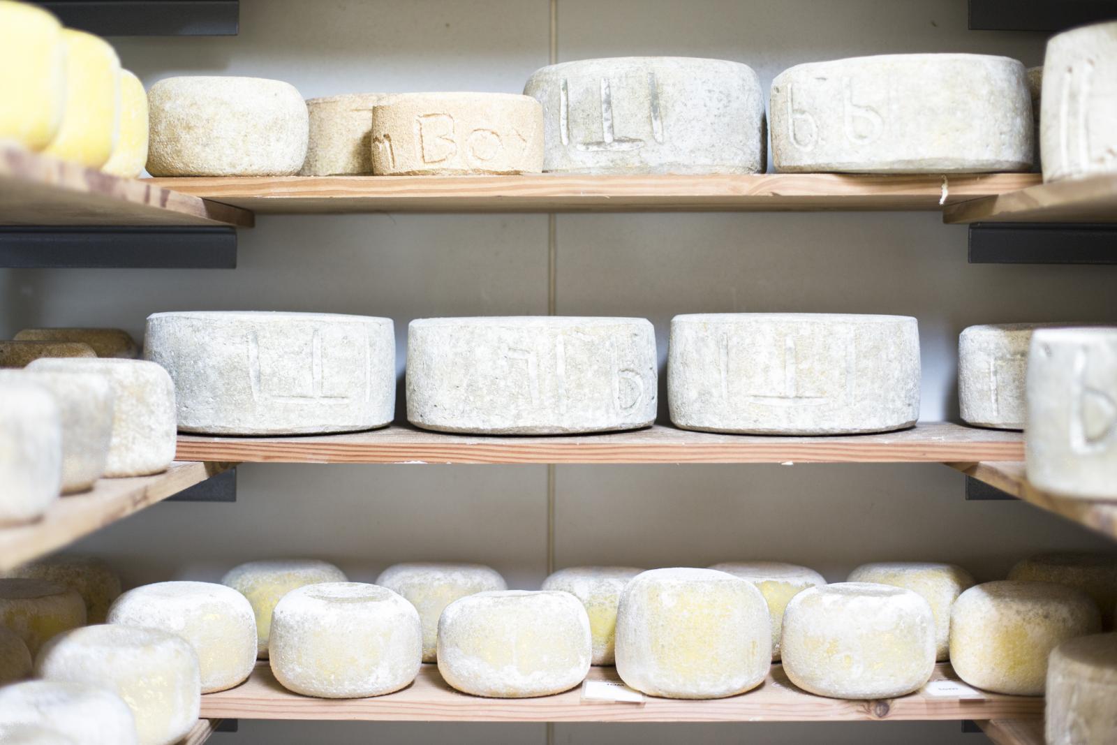 Bruny Island cheese near Hobart Tasmania