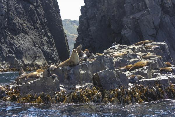 Bruny Island Seals near Hobart